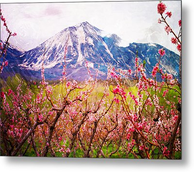 Peach Blossoms And Mount Lamborn II Metal Print by Anastasia Savage Ealy