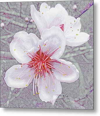 Metal Print featuring the digital art Peach Blossoms by Jane Schnetlage