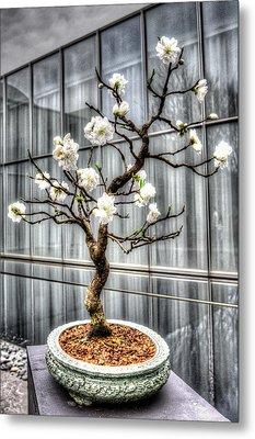 Peach Bonsai Tree Metal Print