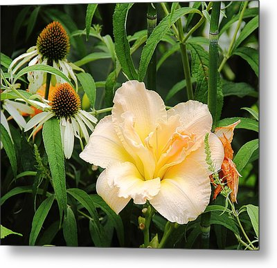 Peach Day Lily Metal Print