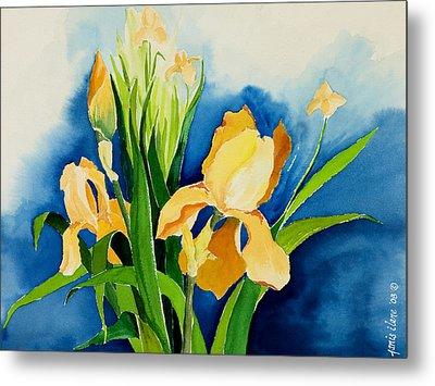 Peach Irises Metal Print by Janis Grau