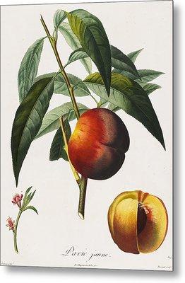Peaches Metal Print by Pierre Antoine Poiteau