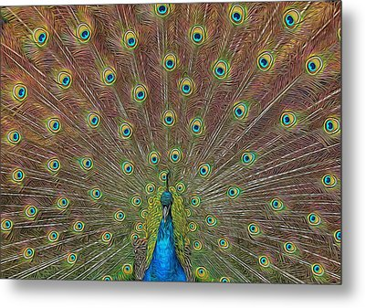 Metal Print featuring the photograph Peacock Fanfare by Diane Alexander