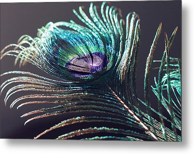 Peacock Feather In Sun Light Metal Print by Angela Murdock