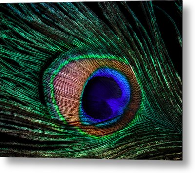Peacock Feather Metal Print by June Marie Sobrito