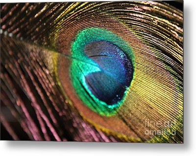 Metal Print featuring the photograph Peacock Feather by Terri Thompson