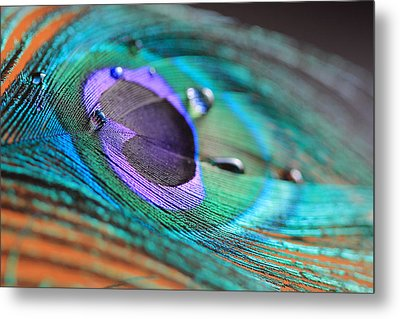 Peacock Feather With Water Drops Metal Print by Angela Murdock