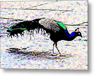 Peacock In Abstract Metal Print
