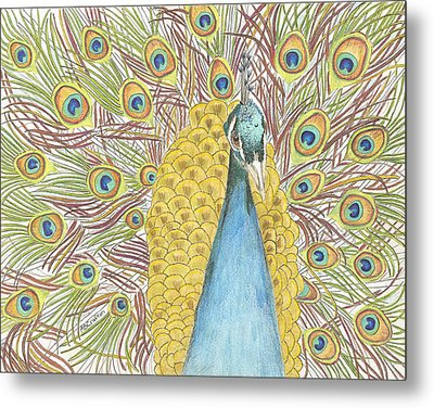 Metal Print featuring the drawing Peacock One by Arlene Crafton