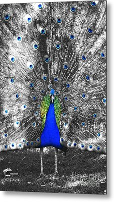 Peacock Plumage Color Splash Selective Color Film Grain Digital Art Metal Print