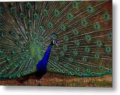 Peacock Strut Metal Print