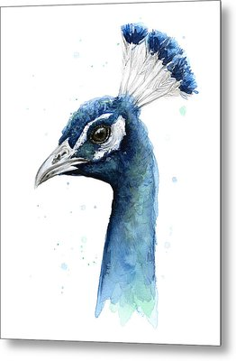 Peacock Watercolor Metal Print