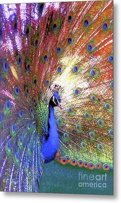Peacock Wonder, Colorful Art Metal Print by Jane Small