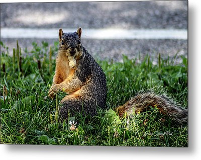 Metal Print featuring the photograph Peanut by Joann Copeland-Paul