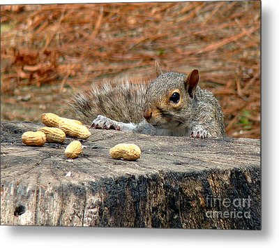 Metal Print featuring the photograph Peanut Surprise by Sue Melvin