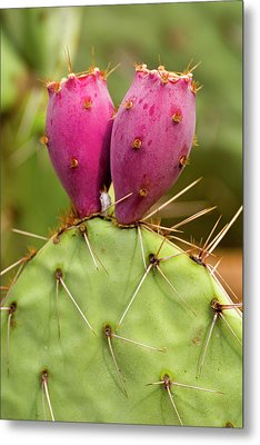 Metal Print featuring the photograph Pear O Fruit V07 by Mark Myhaver
