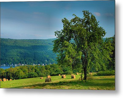 Pear Tree And Hayfield Metal Print by Steven Ainsworth