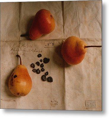 Pears And Ammonites On Paper Metal Print