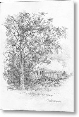 Pecan Tree Metal Print