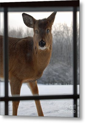 Peek A Boo Metal Print by Diane E Berry