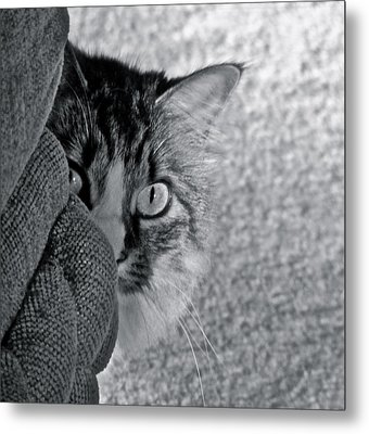 Peek A Boo Metal Print by Eve Spring