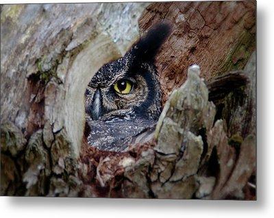 Peek A Boo Owl Metal Print
