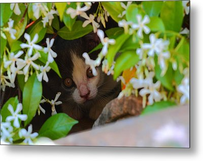 Metal Print featuring the photograph Peek-a-boo by Richard Patmore