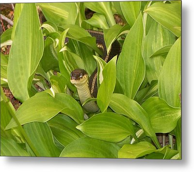 Peek A Boo Metal Print by Rosanne Bartlett