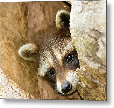 Metal Print featuring the photograph Peek A Boo by Timothy McIntyre