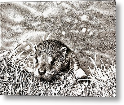 Peekaboo Metal Print by Dorothy Berry-Lound