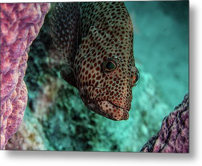 Metal Print featuring the photograph Peeking Coney by Jean Noren