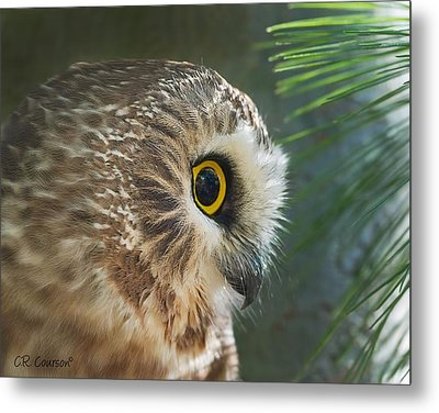 Peeking Out Metal Print by CR  Courson