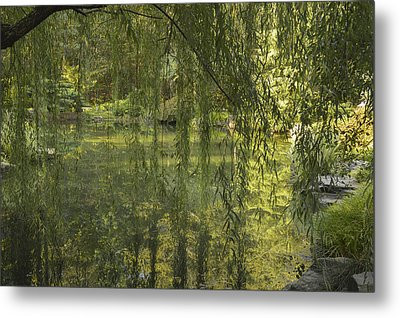 Peeking Through The Willows Metal Print by Linda Geiger