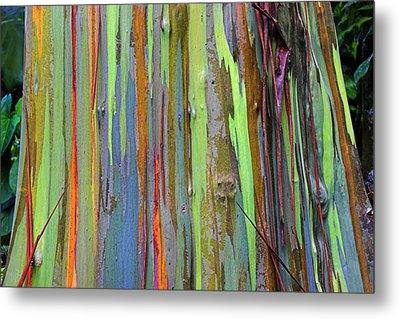 Metal Print featuring the photograph Peeling Bark- St Lucia. by Chester Williams