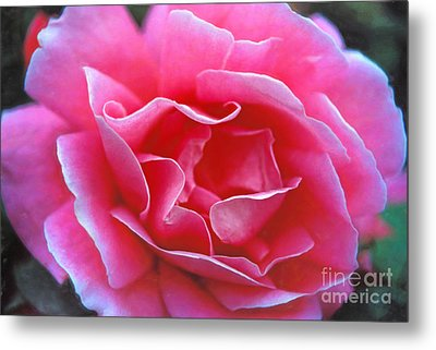Metal Print featuring the photograph Peggy Lee Rose Bridal Pink by David Zanzinger