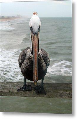 Pelican Beak Metal Print