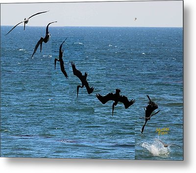 Pelican Dive 7 Photos In 2.5 Seconds Metal Print