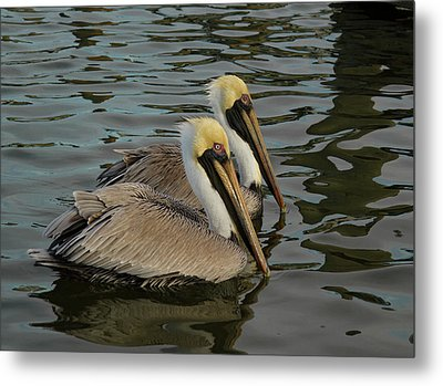 Metal Print featuring the photograph Pelican Duo by Jean Noren