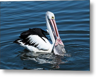 Pelican Fishing 6661 Metal Print