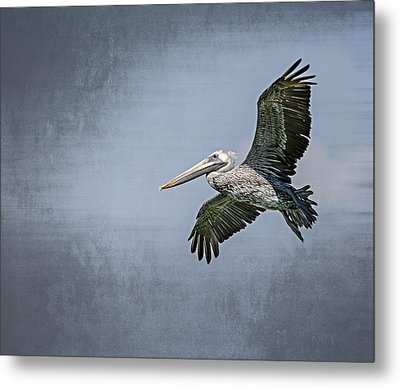 Metal Print featuring the photograph Pelican Flight by Carolyn Marshall