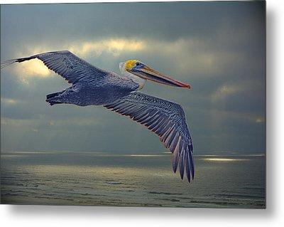 Pelican Flight Metal Print