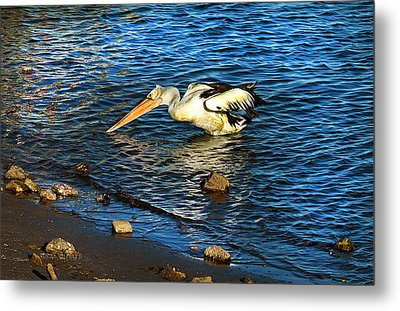 Pelican In Action Metal Print by Susan Vineyard