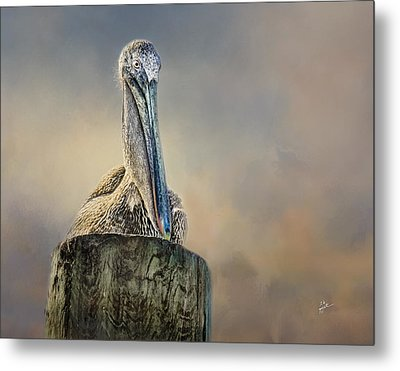 Pelican In Paradise Metal Print by TK Goforth