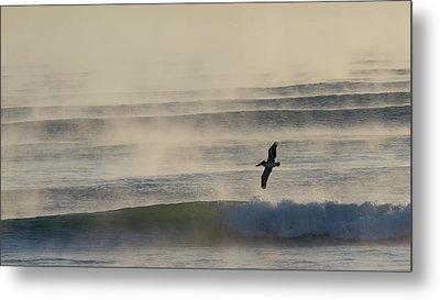 Pelican In Sea Smoke Metal Print