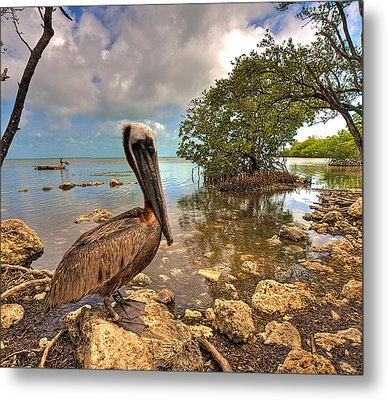 Pelican In The Florida Keys Metal Print