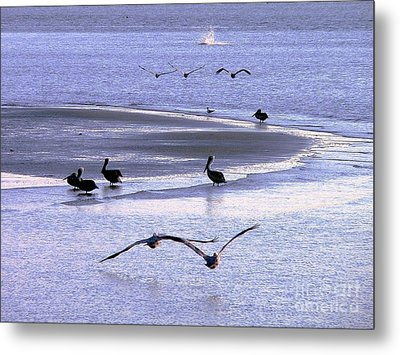 Pelican Island Metal Print by Al Powell Photography USA