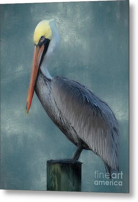 Metal Print featuring the photograph Pelican Portrait by Benanne Stiens