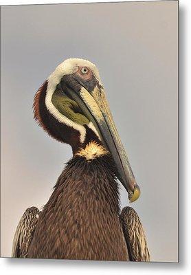 Pelican Portrait Metal Print by Nancy Landry