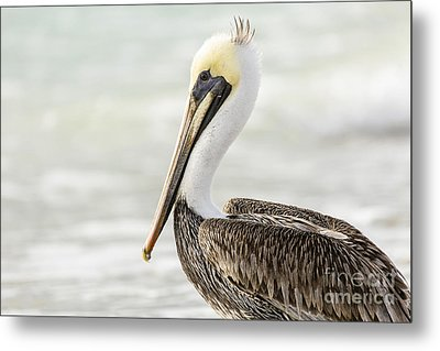 Pelican Pose Metal Print