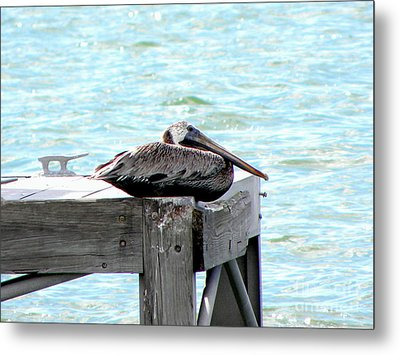 Metal Print featuring the photograph Pelican Resting by Terri Mills